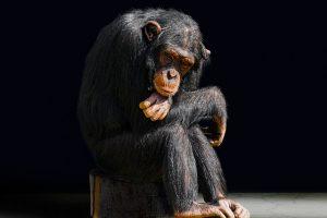 animal-3086397_640